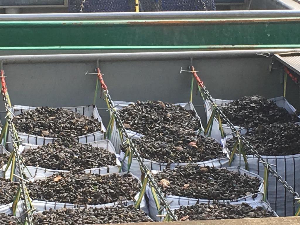 Blick auf den Fischkutter mit großen Säcken voller Miesmuscheln